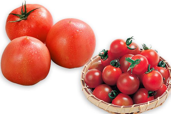 トマト・ミニトマト